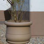 Dune Palms Pot